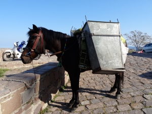 Poney dustman for the narrow streets at Molyvos, Lesbos. This local breed of poney is also used for «ambling races» at village fetes.