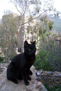 Le chat noir de Vathia. Magne, Péloponnèse.