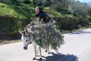 Une ânière du Péloponèse